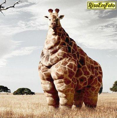 girafa_gorda_lazanha_e_macdonalds